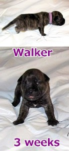 walke3weeks