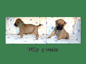 willy5weekscoll