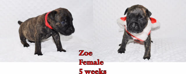 Zoe is sale pending